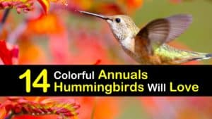 Annuals for Hummingbirds titleimg1