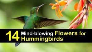 Best Flowers for Hummingbirds titleimg1