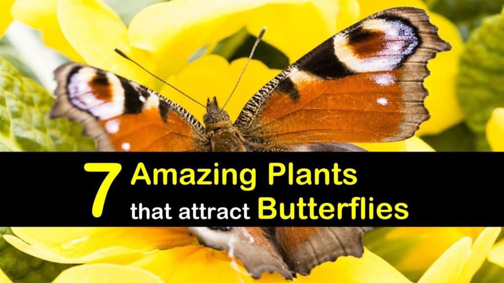 Butterfly Host Plants titleimg1