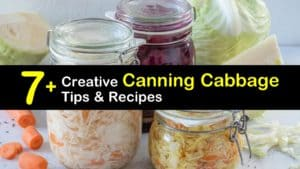 Canning Cabbage titleimg1