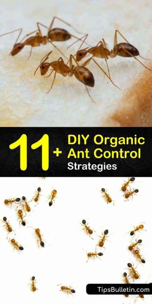 Learn how to use DIY methods to kill ants by mixing up peppermint essential oil in a spray bottle. Get rid of an ant problem with effective pest control, determination, and some baking soda. #antcontrol #organicantcontrol #organic #ants