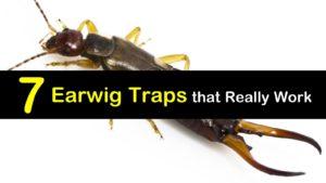 Earwig Traps titleimg1