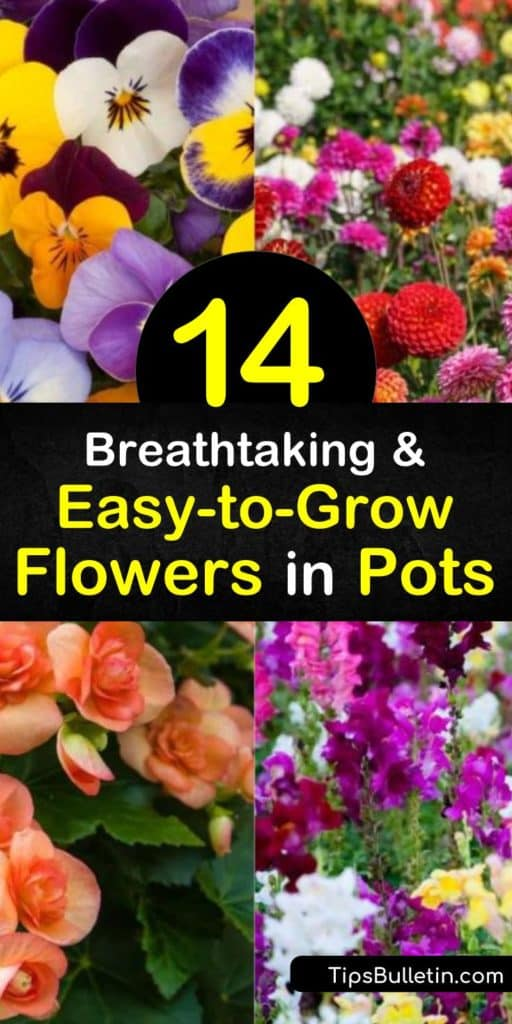 Find your green thumb and learn how to keep geraniums, morning glory, impatiens, and pansies alive with container gardening. Plant these low-maintenance plants in a window box or hanging baskets for a pop of color around homes with limited garden space. #easy-to-grow #flower #pots