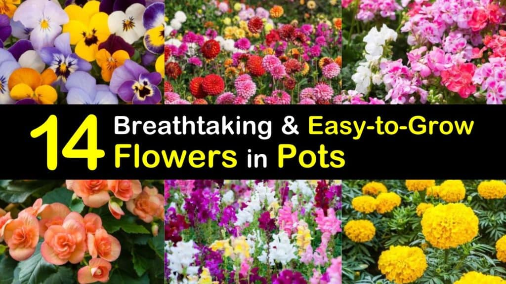 Easy to Grow Flowers in Pots titleimg1
