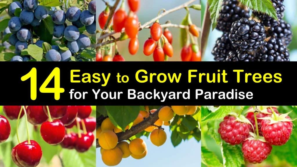 Easy to Grow Fruit Trees titleimg1