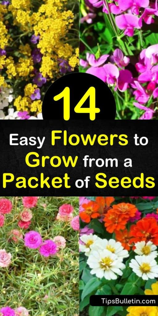 Seed packets offer an excellent way to save money when creating flower beds. Seeds also provide you with more options than what your local nursery offers. Let us show you how to obtain seeds from your community and provide you with planting tips. #seedpackets #flowerseeds #seeds #plants #flowers