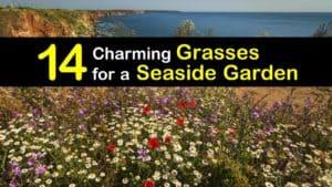 Grasses for Seaside titleimg1