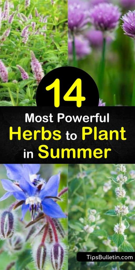 Fill your herb garden with fresh summer herbs like tarragon, lemongrass, coriander, and fennel. Growing these herbs in your windowsill or vegetable garden allows you to add flavor to your food that's only an arm's reach away. #beneficialherbs #herbs #plant