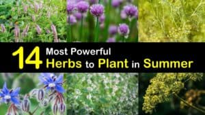 Herbs to Plant in Summer titleimg1