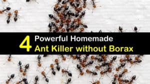 Homemade Ant Killer without Borax titleimg1