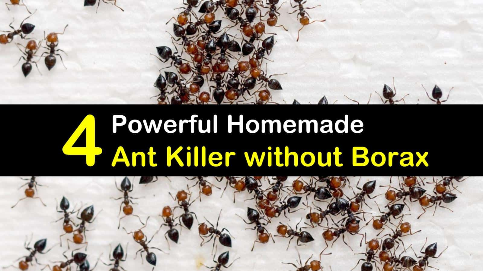 4 Powerful Homemade Ant Killer Without Borax