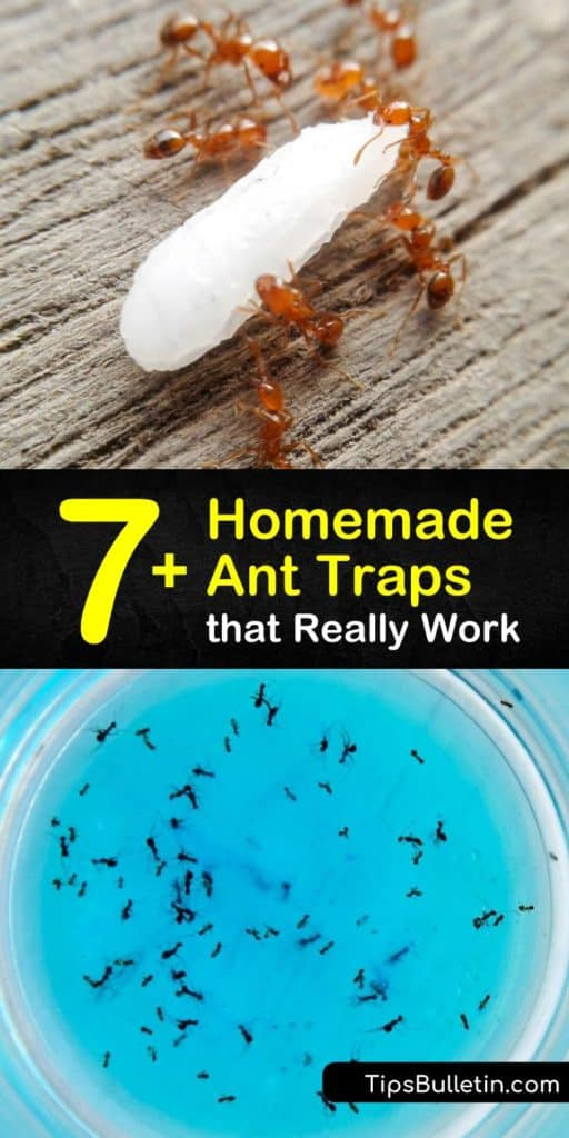 Learn how to make a homemade ant trap as a form of DIY pest control. Tempt the pests with an ant bait like powdered sugar or peanut butter, then kill ants with Borax or baking soda. Target sugar ants, fire ants, and more with a homemade ant killer. #trap #ants #diyanttraps #killants