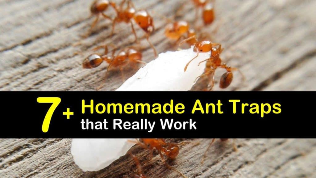 Homemade Ant Trap titleimg1