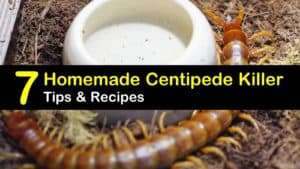 Homemade Centipede Killer titleimg1