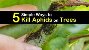 How to Get Rid of Aphids on Trees titleimg1