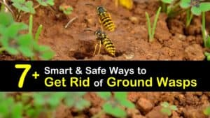 How to Get Rid of Ground Wasps titleimg1