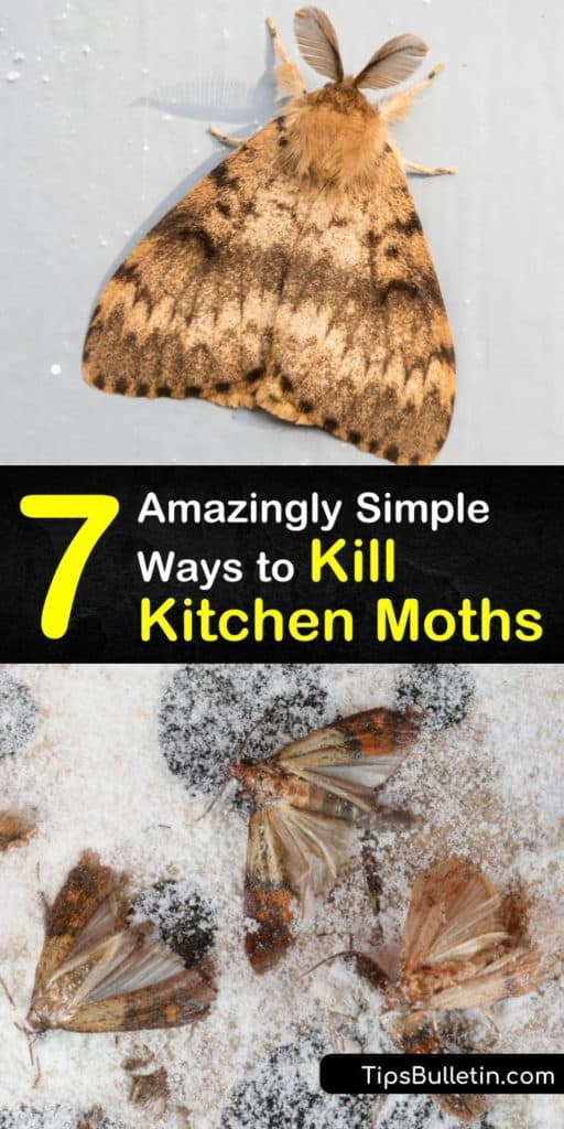Let this step-by-step guide teach you how to get rid of pantry moths and moth larvae for good. Discover how unique tips like using bay leaves for pest control will protect your dry goods and pet food from invasion. #killmoths #kitchen #moths