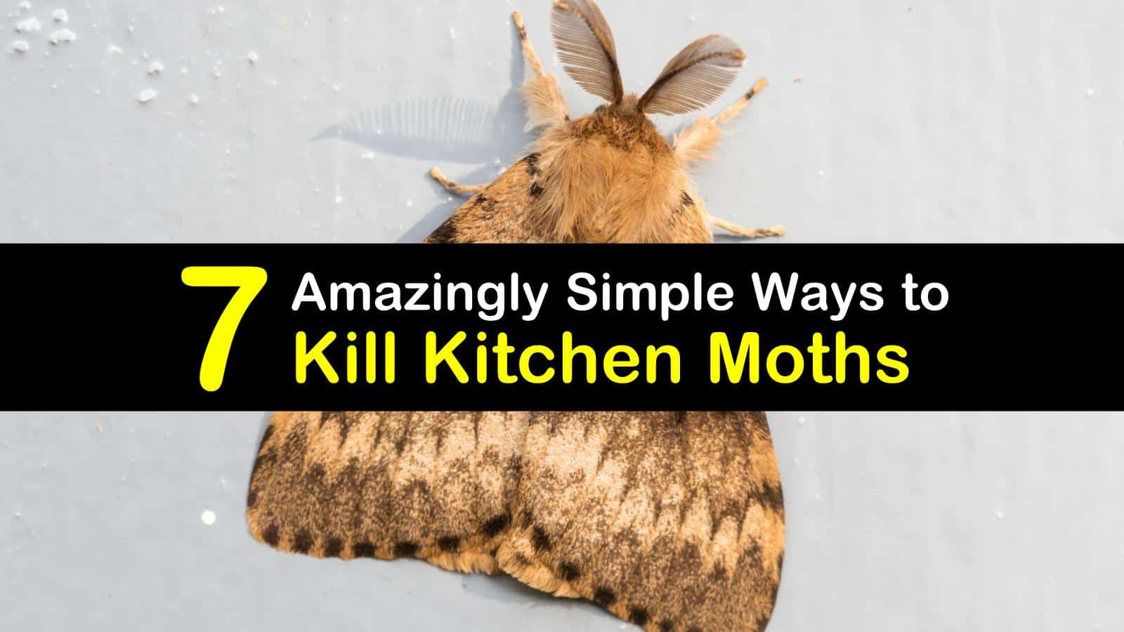 7 Amazingly Simple Ways To Kill Kitchen Moths