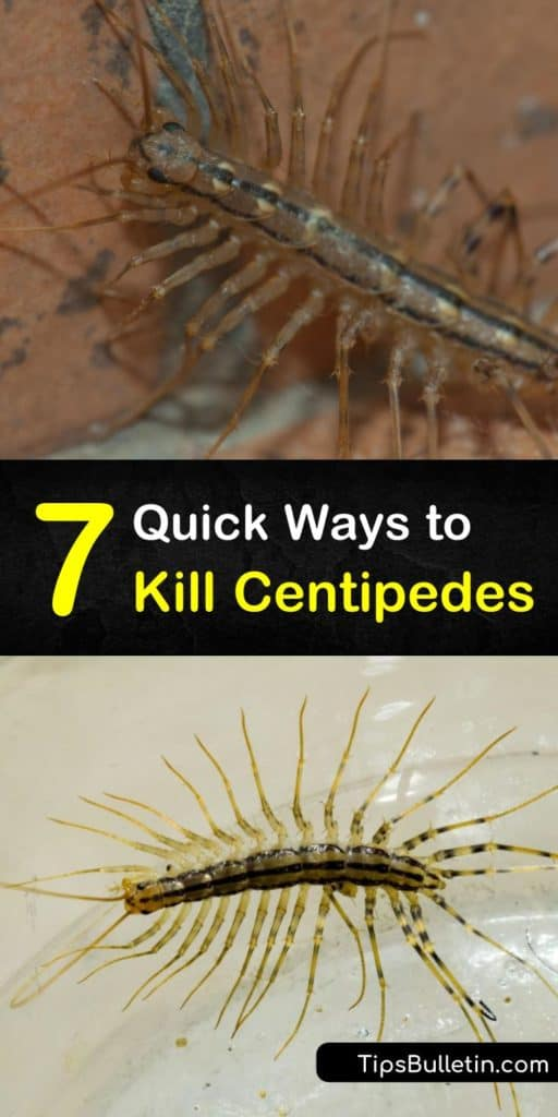 This is a step-by-step guide to killing centipedes in your home and preventing an infestation without having to call pest control. If you've spotted centipedes around damp areas, closets, or baseboards, use these tips to rid them from your home for good. #kill #centipedes #pestcontrol