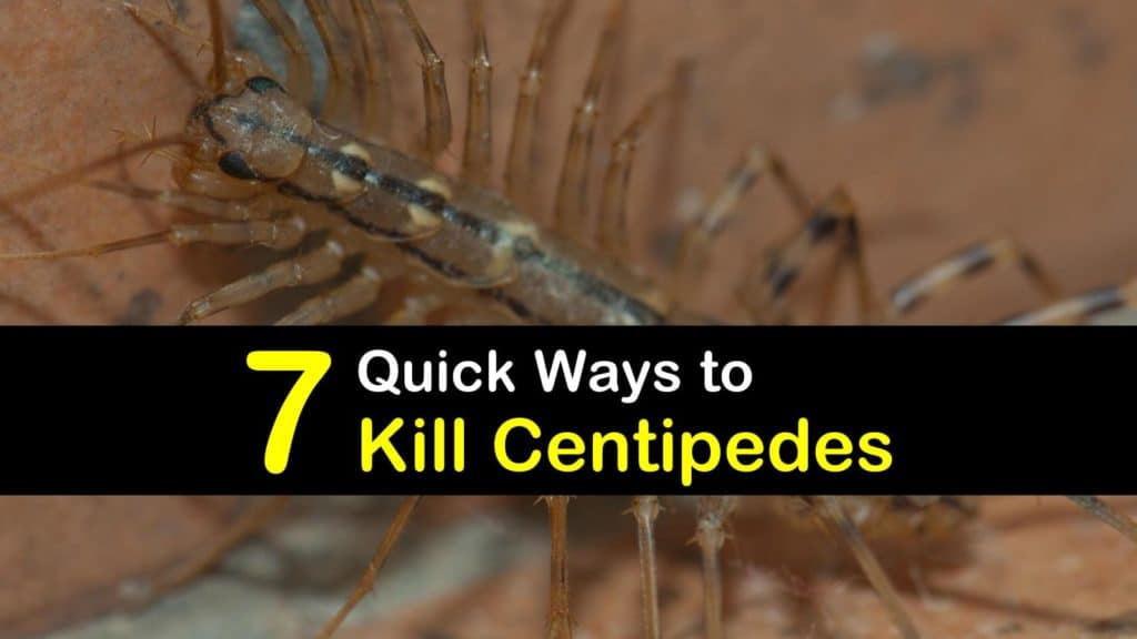 How to Kill Centipedes titleimg1