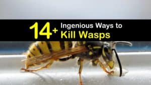 How to Kill Wasp titleimg1