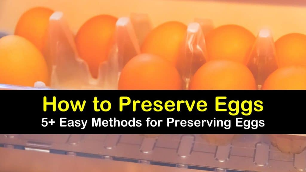 How to Preserve Eggs titleimg1