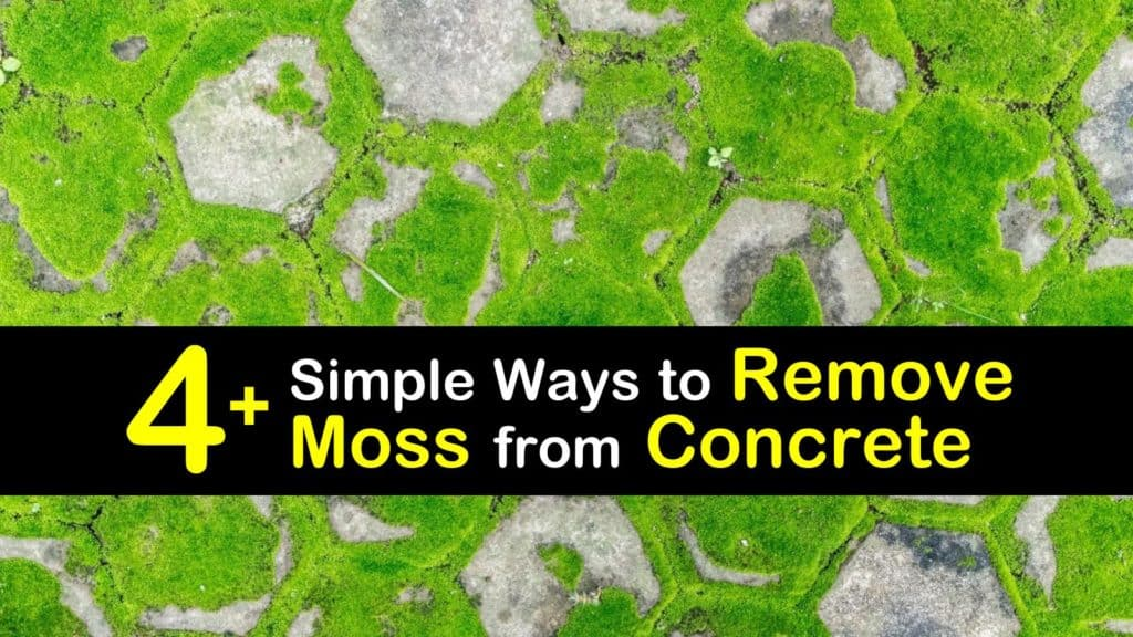 How to Remove Moss from Concrete titleimg1