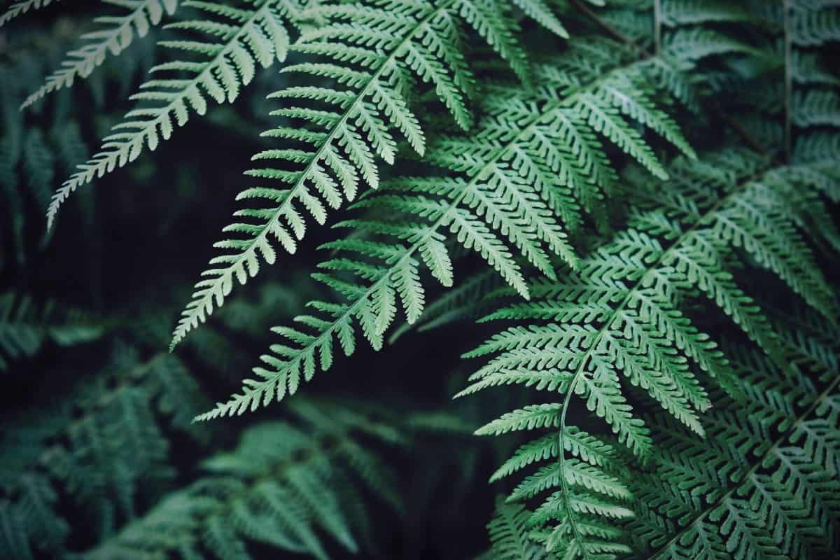 Plant some lady ferns if you need plants that are pest-resistant.