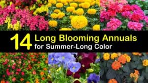 Long Blooming Annuals titleimg1