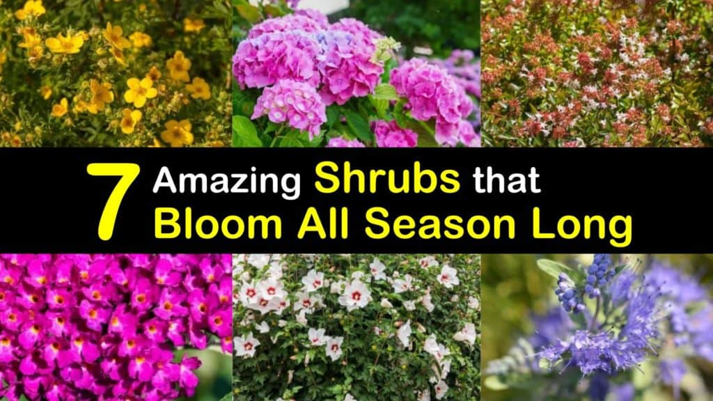 Long Blooming Shrubs titleimg1