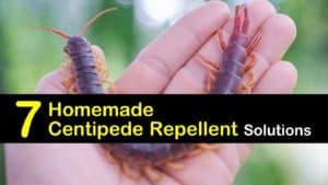 Natural Centipede Repellent titleimg1