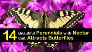 Perennials that Attract Butterflies titleimg1