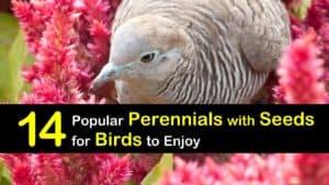 Perennials with Seeds for Birds titleimg1