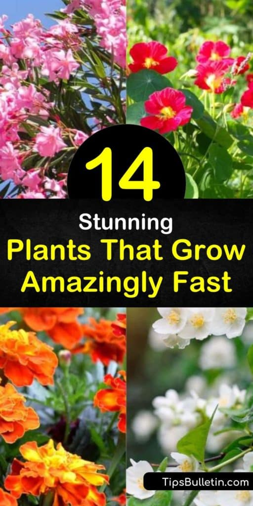 Find plants that grow amazingly fast while adding pops of color to any garden across the United States. Add fast growing plants like marigolds for lovely flowers, or shade trees like sequoias and cottonwood. For warmer climates, try drought-tolerant plants like Aloe and Oleander. #plants #grow #fast