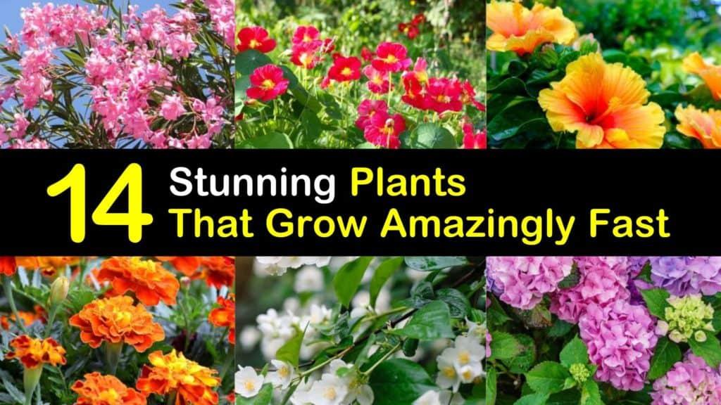 Plants that Grow Amazingly Fast titleimg1