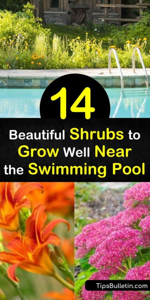 When selecting shrubs to grow near the pool, choose those that add vibrant color to any landscape design, such as Hibiscus or Bird of Paradise. Plant palm trees to provide shade over the swimming pool in hot weather. Use lemongrass and geraniums to repel pesky mosquitoes. #shrubs #grow #near #pool