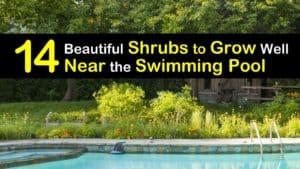 Shrubs to Grow Near the Pool titleimg1