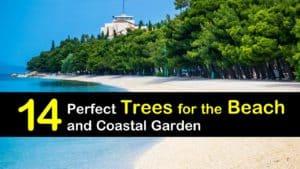 Trees for the Beach titleimg1