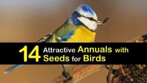 Annuals for Birds titleimg1
