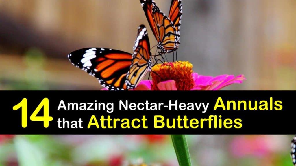 Annuals that Attract Butterflies titleimg1