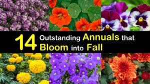 Annuals that Bloom into Fall titleimg1