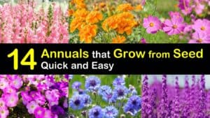Annuals that Grow from Seed titleimg1