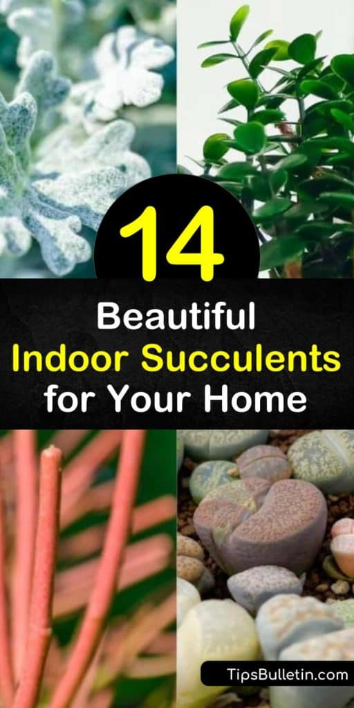 Discover the most beautiful succulent plants for your home, such as houseplants from common families like Sempervivum, Aeonium, Echeveria, Aloe, Kalanchoe, and Agave. #succulents #houseplants #indoorsucculents