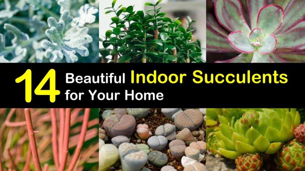 Beautiful Succulents titleimg1