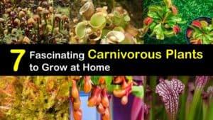 Carnivorous Plants titleimg1