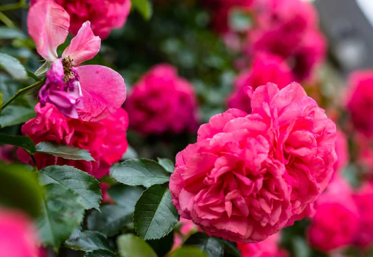 Add a climbing rose to a trellis for a sweet fragrance.