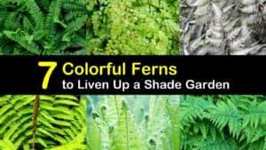 Colorful Ferns titleimg1