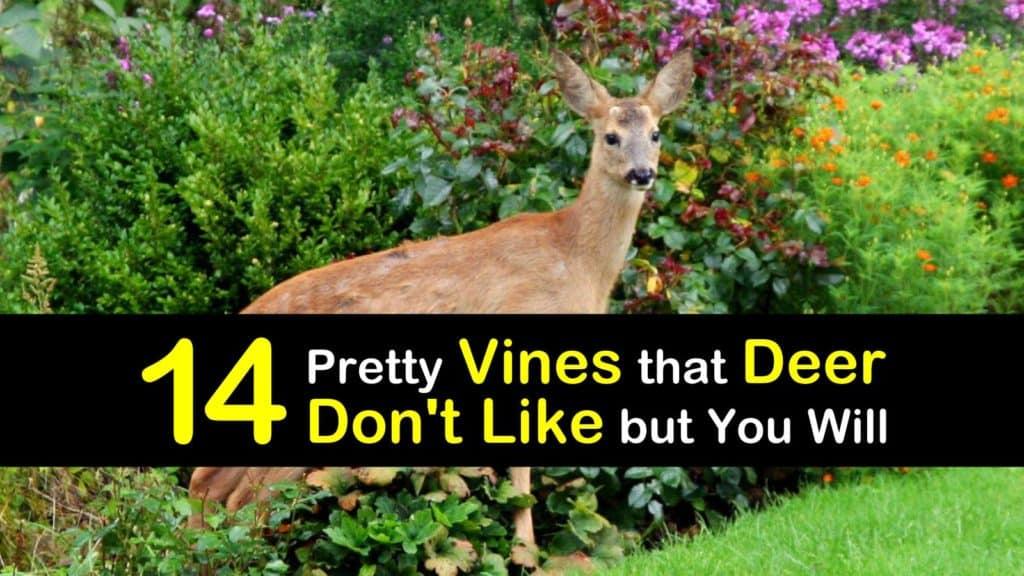 Deer Resistant Vines titleimg1