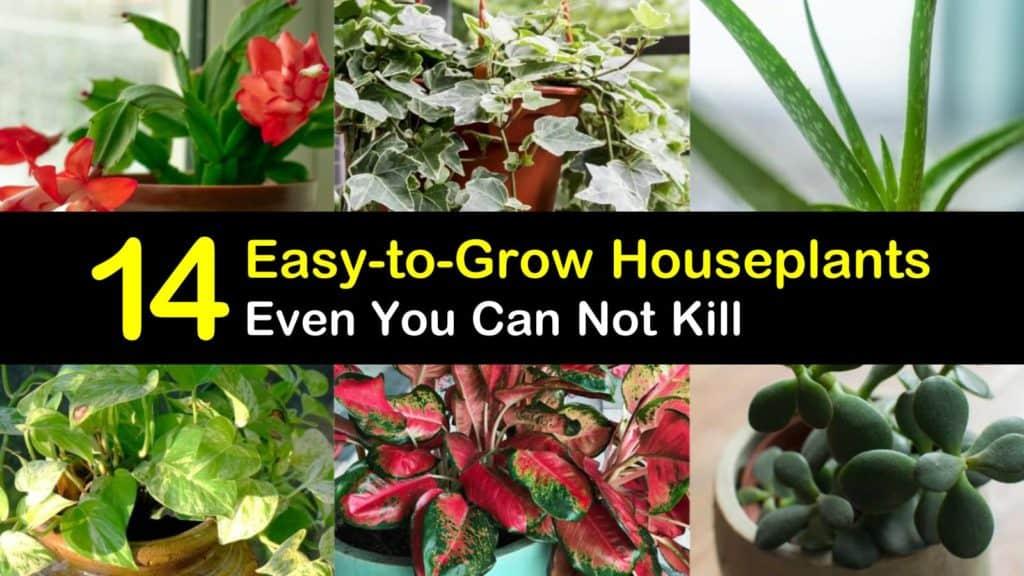 Easy to Grow Houseplants titleimg1