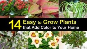 Easy to Grow Plants titleimg1